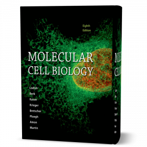 download free Molecular Cell Biology 8th edition by Lodish , Berk & Kaiser published Freeman 2016 book in pdf format